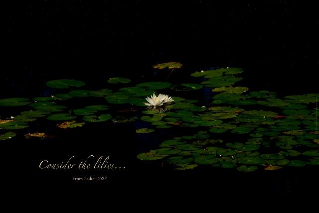 lilies final