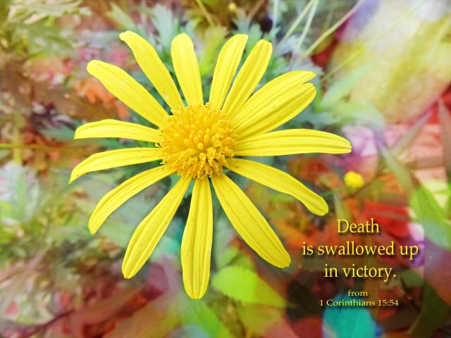 swallowed