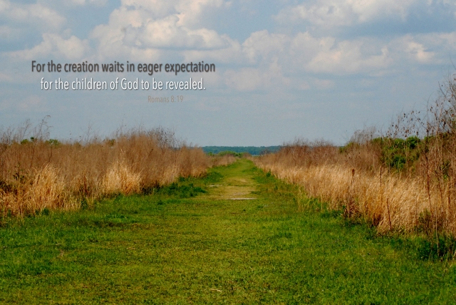eager expectation