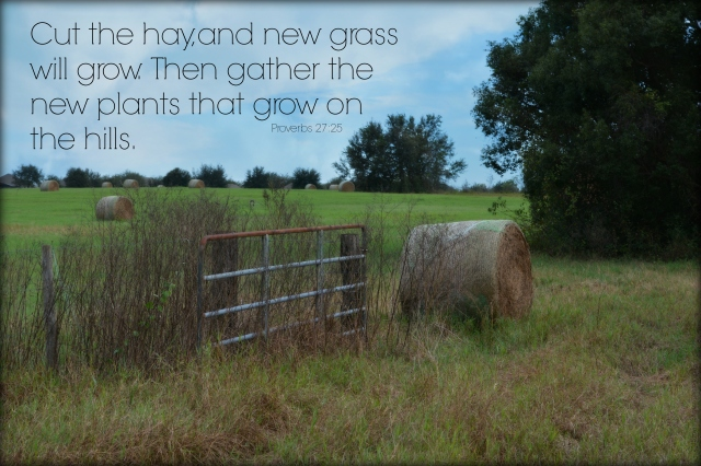 cut the hay