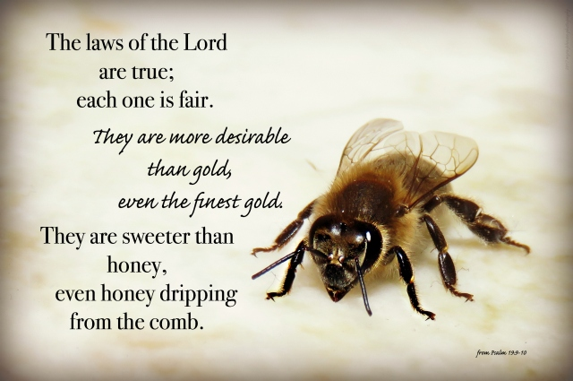 even honey