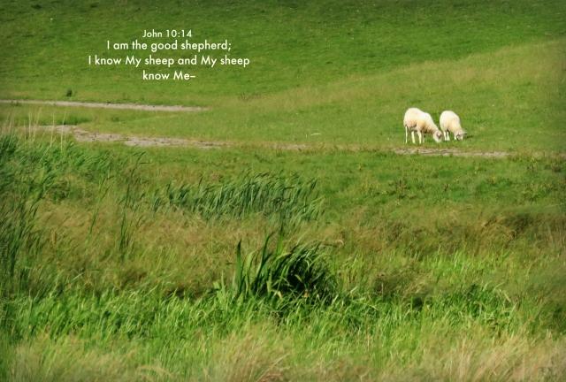 sheep know.jpg