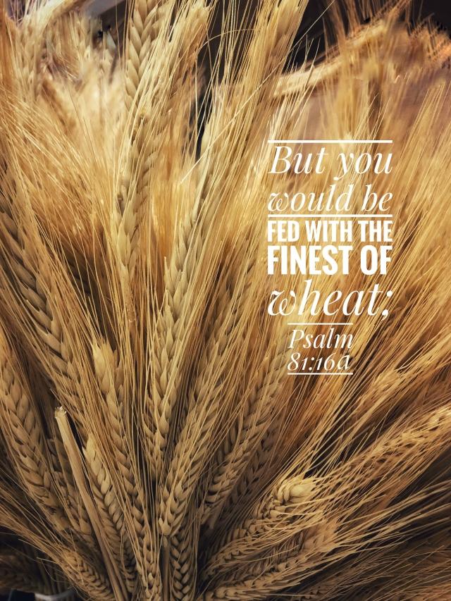 finest of wheat final